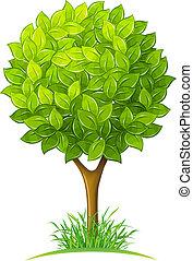 зеленый, leaves, дерево