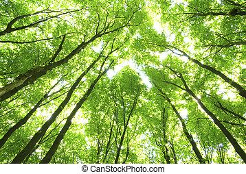 зеленый, trees