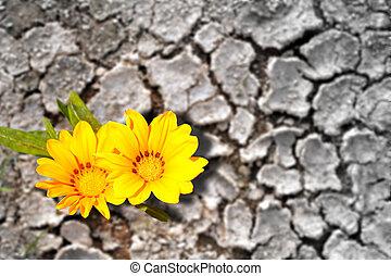 земельные участки, засушливый, концепция, blooming, цветы, persistence.