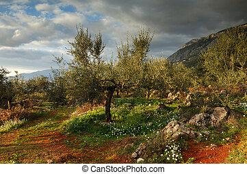 земельные участки, messinia