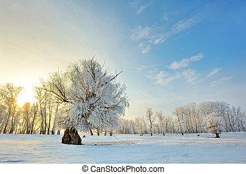 зима, закат солнца, красивая, trees