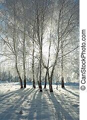 зима, лес