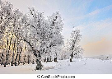 зима, морозный, trees