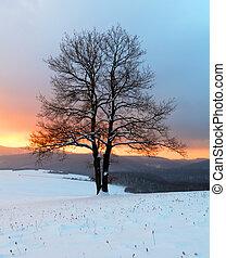 зима, природа, -, дерево, пейзаж, в одиночестве, восход