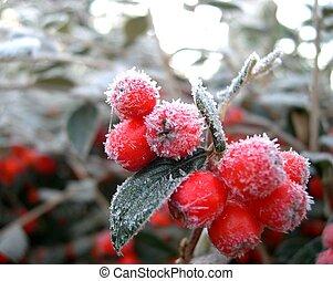 зима, ягода