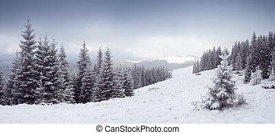 зима, trees