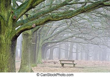 зима, trees, осень, лес, падать, туманный, проспект, пейзаж