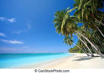 идеально, тропический, остров, пляж, рай