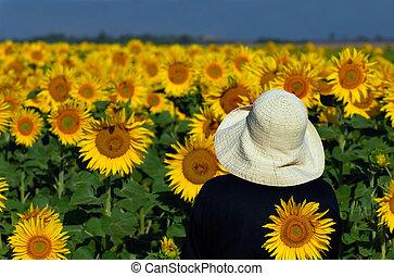 ищу, sunflowers
