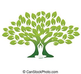 йога, дерево