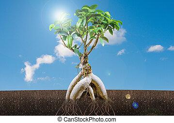 карликовое дерево, синий, дерево, небо, рост, устойчивый, concept: