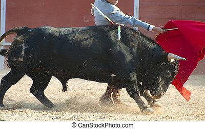 картина, spain., черный, борьба, бык