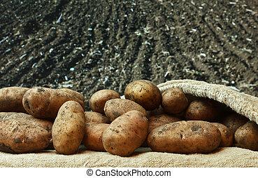 картофель, lands, задний план, сельскохозяйственное