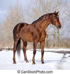каштан, постоянный, лошадь, field.