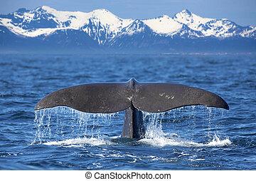 кит, хвост