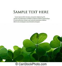 клевер, пространство, text., зеленый, leafs, граница