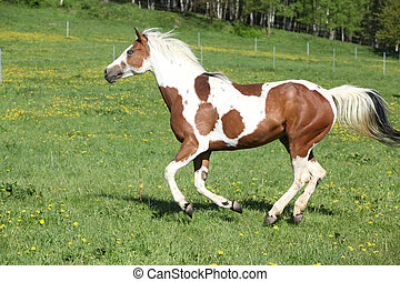 кобыла, лошадь, пастьба, покрасить, бег, безумно красивая