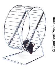 колесо, немного, мышь, упражнение