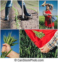 коллаж, сельское хозяйство