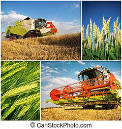 коллаж, -, уборка урожая, пшеница