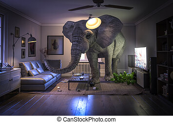 комната, слон, внутри, живой, большой