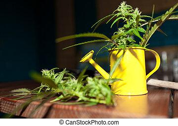 конопля, растение, инструменты, сад