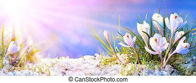 концепция, солнечный лучик, весна, крокус, цветы, -, blooming, абстрактные