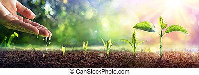 концепция, plants, вспышка, рука, выращивание, -, полив, молодой, эффект