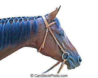 коричневый, глава, horse.