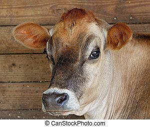 коричневый, джерси, корова