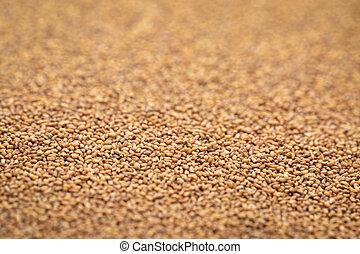 коричневый, зерно, teff, задний план