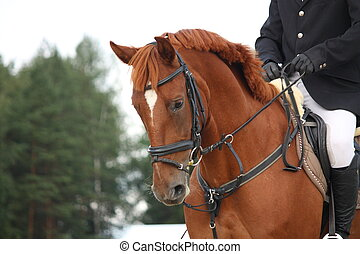 коричневый, лошадь, уздечка, портрет