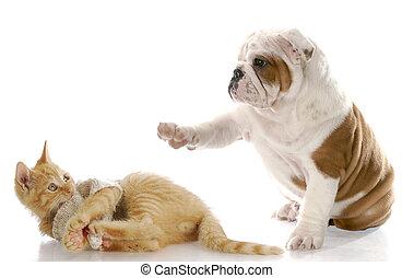кот, собака, борьба