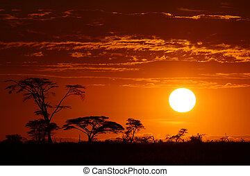 красивая, африка, закат солнца, сафари