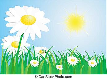 красивая, весна, луг