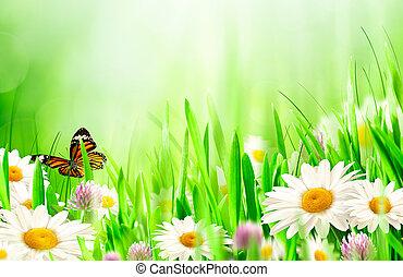 красивая, весна, цветы, ромашка, backgrounds