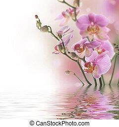 красивая, воды, orchids