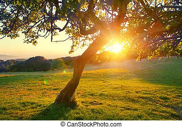 красивая, гора, луг, природа, над, дерево, закат солнца, landscape., высокогорный