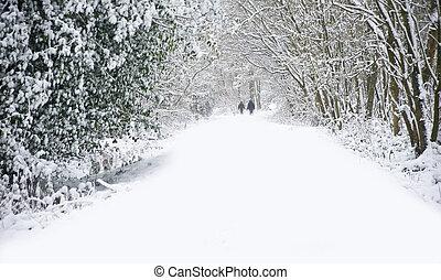 красивая, гулять пешком, зима, семья, снег, глубоко, место действия, девственница, лес, дорожка, дорожка, dogs