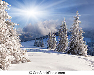 красивая, зима, trees., снег, covered, пейзаж