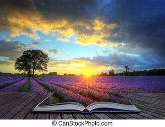 красивая, концепция, атмосферный, созревший, вибрирующий, сельская местность, поля, образ, небо, лаванда, творческий, оглушающий, закат солнца, английский, clouds, над, пейзаж
