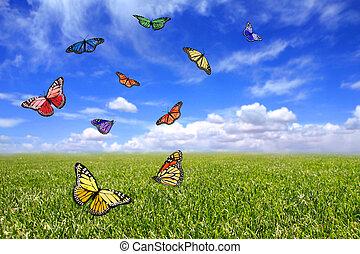 красивая, летающий, свободно, поле, butterflies, открытый