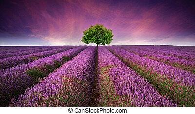 красивая, лето, contrasting, образ, дерево, лаванда, поле, colors, закат солнца, пейзаж, горизонт, один