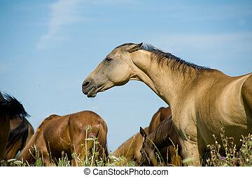 красивая, лошадь, пасти