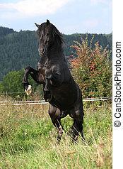 красивая, лошадь, черный, скачущий, пастьба