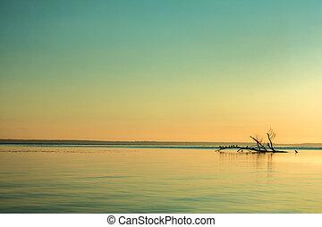 красивая, над, небо, поверхность, спокойный, река, восход