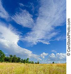 красивая, небо, желтый, поле, драматичный, зеленый, лес, под