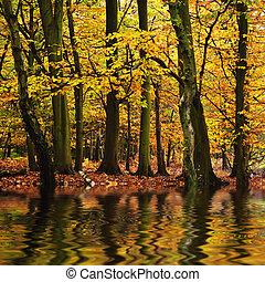 красивая, осень, время года, падать, reflected, n, воды, colors, лес, вибрирующий, пейзаж