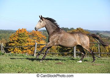 красивая, осень, лошадь, бег, пастьба