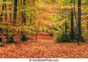 красивая, осень, падать, место действия, лес